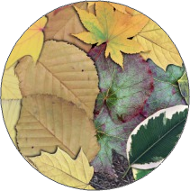 Leaves (Overlapped)